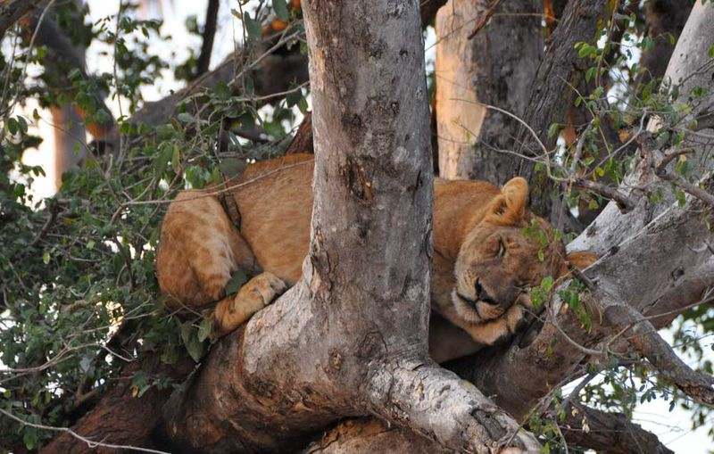 Liontree2_blog