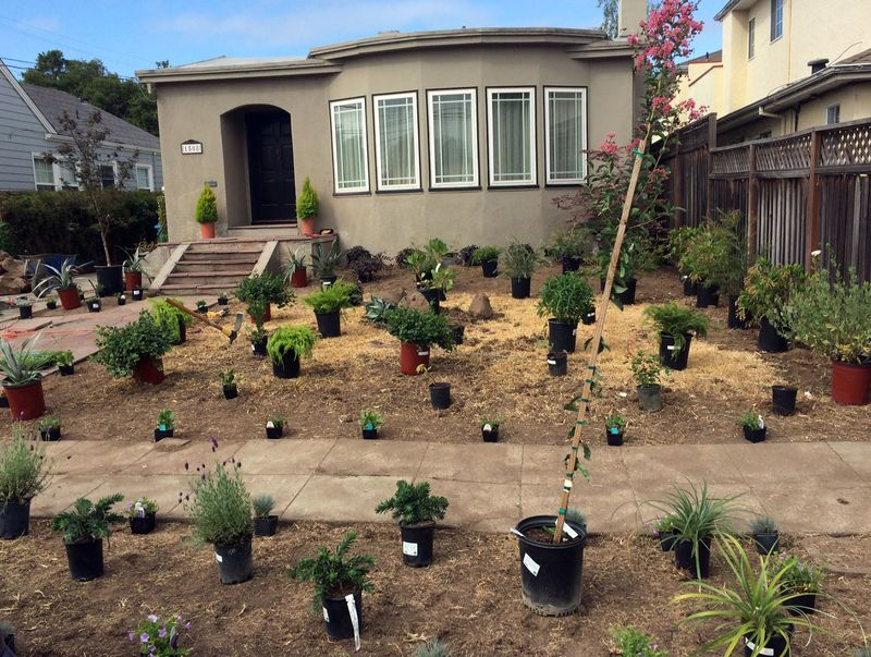 Plantsset_blog